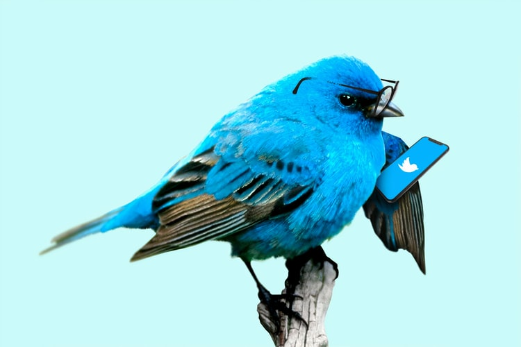 tips to increase twitter followers
